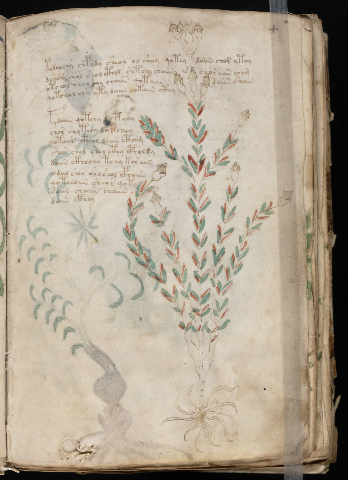 Codigo Voynich Pdf