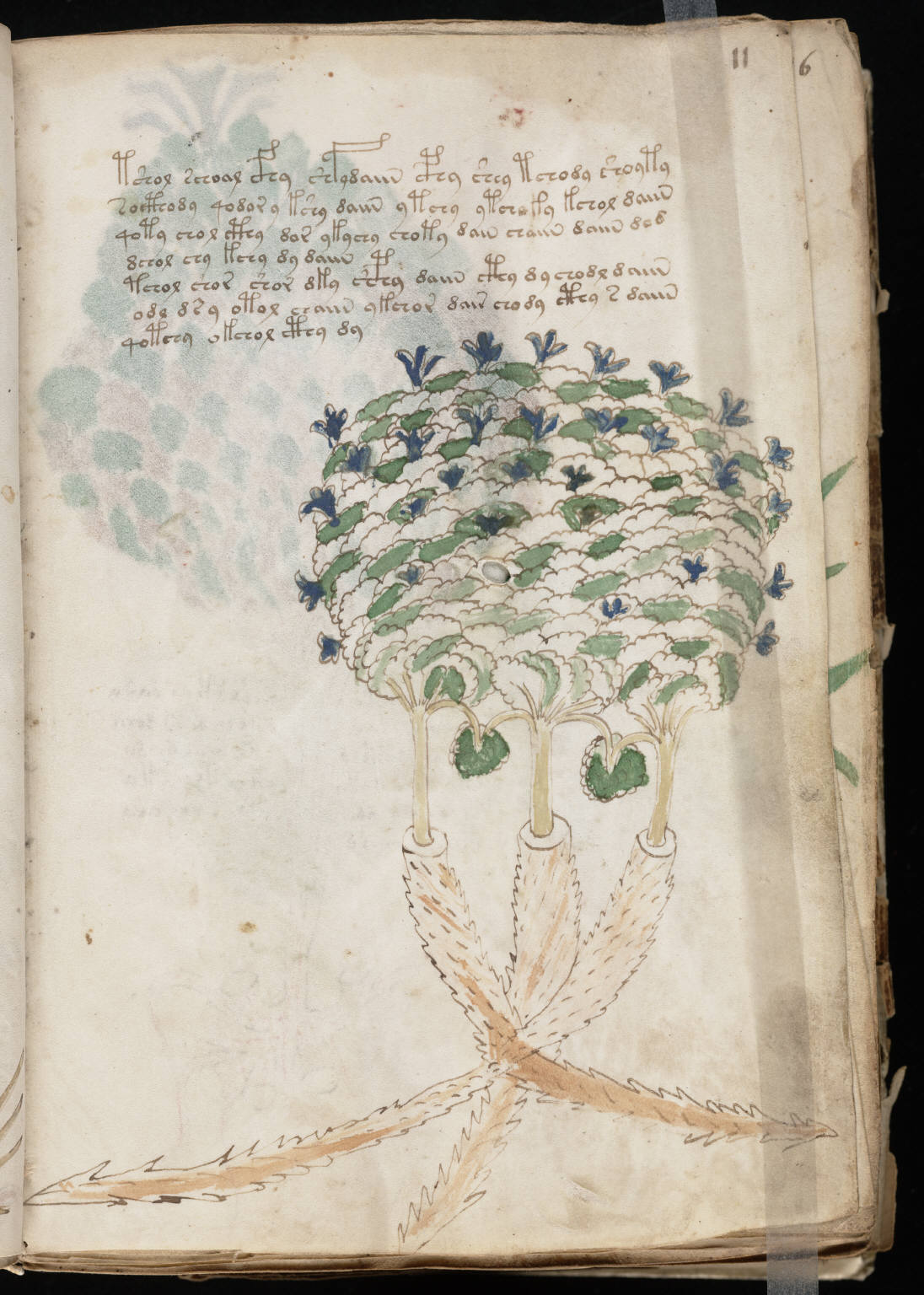 The Voynich Manuscript Pdf