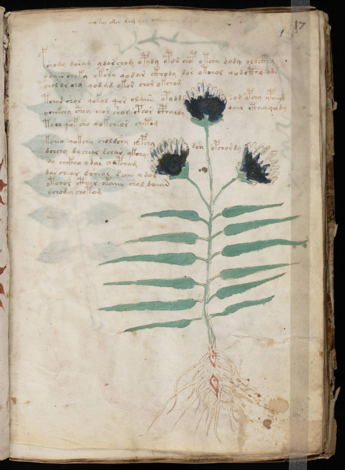 The Voynich Gallery