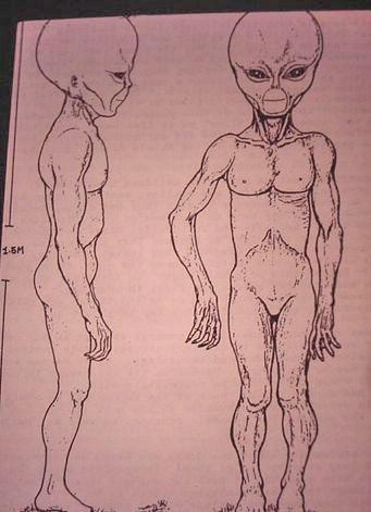 http://www.bibliotecapleyades.net/imagenes/montauk_alien_3.JPG