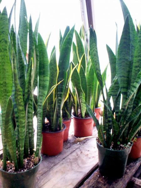 Aire Fresco Como Fabricarlo Con Plantas