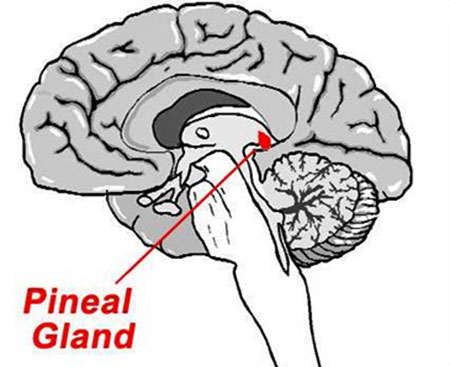The Pineal Gland - Occult Secrets Behind Pine Cone Art and Architecture
