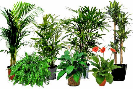 Want Cleaner And Purer Air Try Air Cleaning Plants
