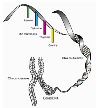 Dna Gateway To Scalar Energy Based Healing A Physicists Perspective