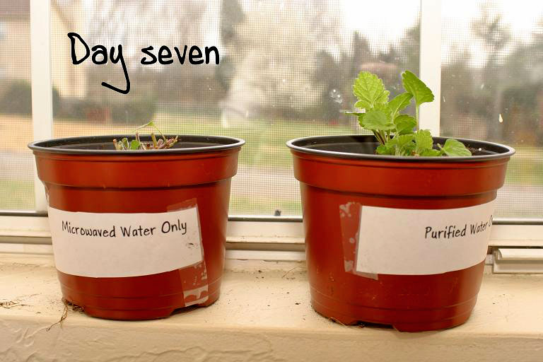 Microwaved Water Kills Plants Experiment