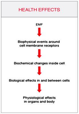 These Natural Emfs Help Regulate Important Biochemical Processes Of All Kinds Maintaining Balance In Those Cellular Electromagnetic Fields Is Crucial To