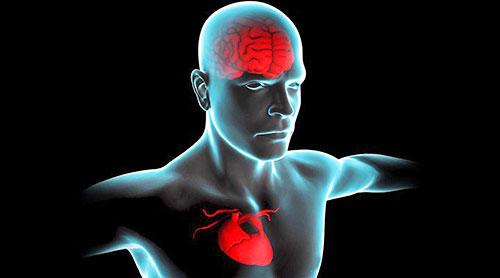 Resultado de imagen de la avaricia y el cerebro