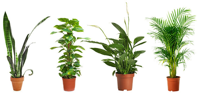 Four Powerful Air Purifying Plants To Clean The Air In