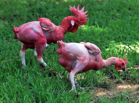 Biotech's Bizarre World - 7 Genetically Modified Animals