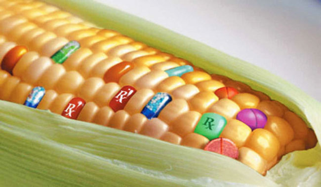 Why GMOs are NOT the Future of Food