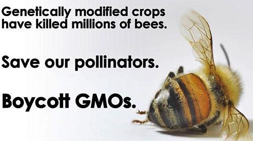 Los peligros de Monsanto Monsanto146_14