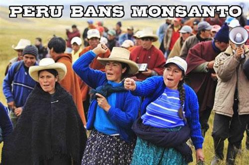 Los peligros de Monsanto Monsanto146_24
