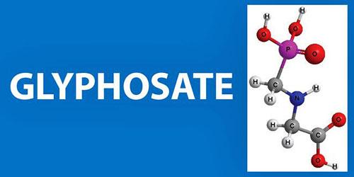 Los peligros de Monsanto Monsanto171_03