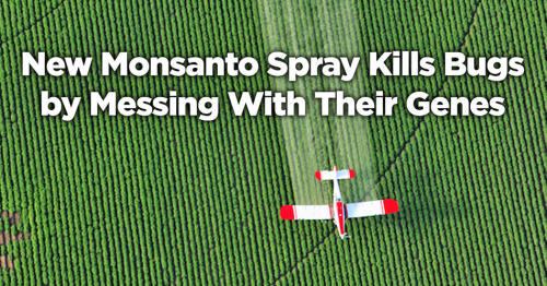 Los peligros de Monsanto Monsanto171_06_small