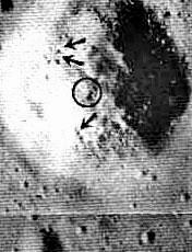 Else pdf the somebody moon is leonard george on