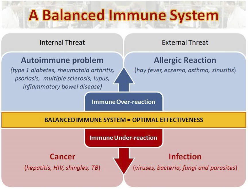 a look at the human immune system Human physiology/the immune system lets take a closer look at hiv is a retrovirus that primarily infects vital components of the human immune system.