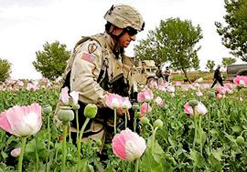 Essay In English Literature Can The Us Triumph In The Drugaddicted War In Afghanistan  Opium The  Cia And The Karzai Administration English Sample Essay also High School Admission Essay Examples Can The Us Triumph In The Drugaddicted War In Afghanistan  Opium  Diwali Essay In English