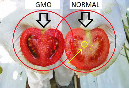 Los peligros de Monsanto Globalfood90_04